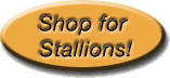 Shop for Stallion Services!